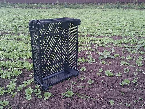 Ящик грибной перфорированный 400x300x110 мм